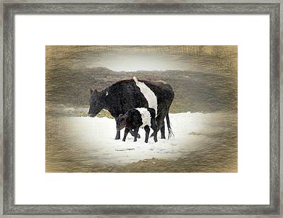 New Life In A Winter Snowfall Framed Print by Donna Kennedy