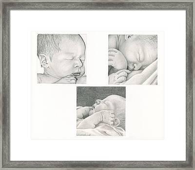 New Life Framed Print by Linda Bissett