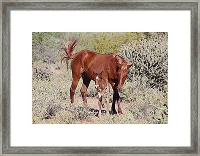 Pacman - A Rescued Foal Framed Print by Christina Boggs