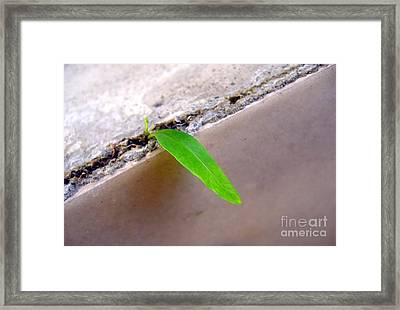 New Life Framed Print by Yali Shi
