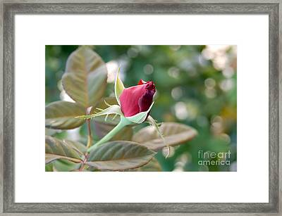 New Love 2 Framed Print