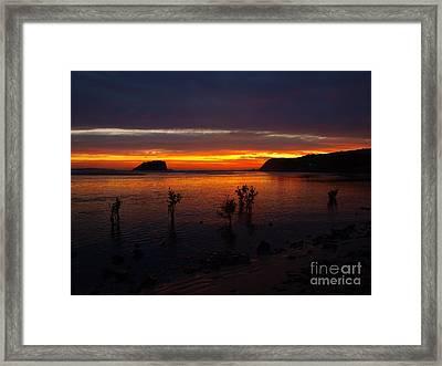 New Mangroves Framed Print