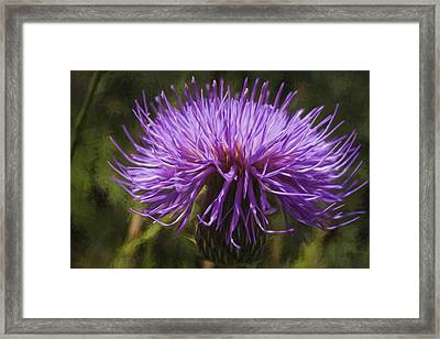 New Mexican Thistle Framed Print