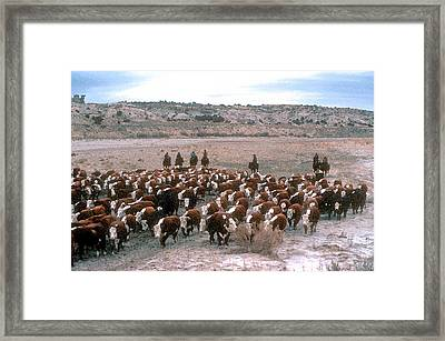 New Mexico Cattle Drive Framed Print by Jerry McElroy