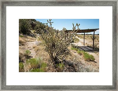 New Mexico Cholla Framed Print