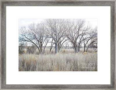 Framed Print featuring the photograph New Mexico Desert Tree Field by Andrea Hazel Ihlefeld