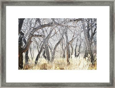 New Mexico Dreamy Jemez Woodland Framed Print by Andrea Hazel Ihlefeld