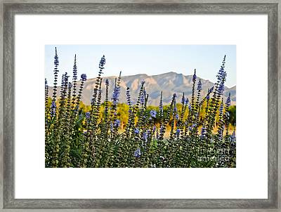 Santa Ana Beauty Framed Print by Gina Savage