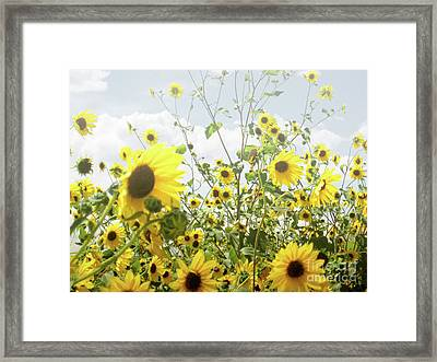 Framed Print featuring the photograph New Mexico Sunflowers by Andrea Hazel Ihlefeld