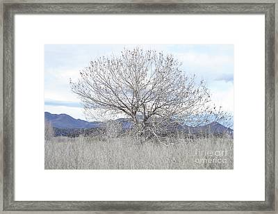 Framed Print featuring the photograph New Mexico Tree Mountain Landscape by Andrea Hazel Ihlefeld