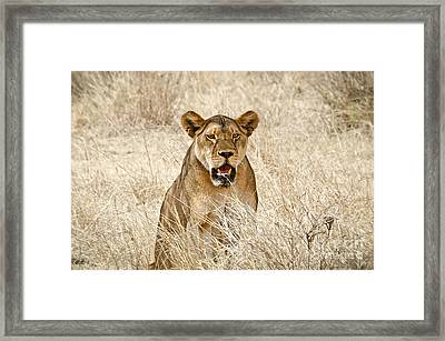 New Opportunities In Sight Framed Print by Alessandro Giorgi Art Photography