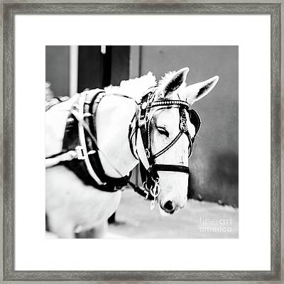 New Orleans Carriage Mule Framed Print