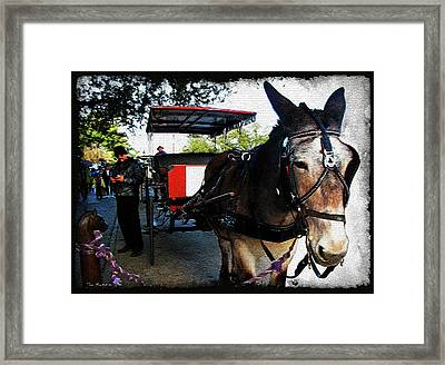 New Orleans Carriage Ride Framed Print by Joan  Minchak