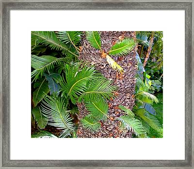 New Palms Framed Print by Mindy Newman