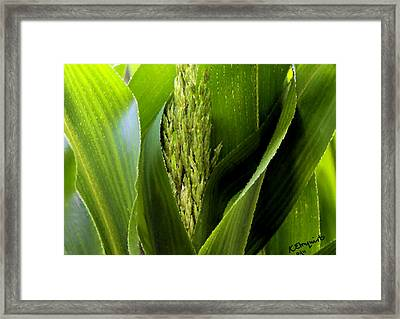 New Silk Framed Print by Kristin Elmquist