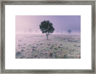 New South Wales Foggy Meadow Framed Print by Jorgo Photography - Wall Art Gallery