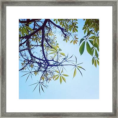 New #spring Leaves On My Tree In The Framed Print