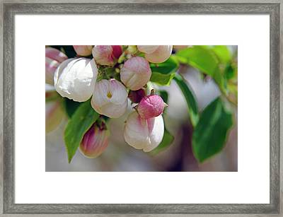 New Framed Print by The Forests Edge Photography - Diane Sandoval