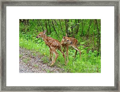 New Twins Framed Print by Sandra Updyke