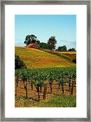 New Vineyard Framed Print
