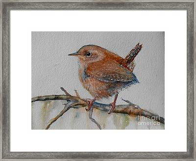 New Year Wren Framed Print