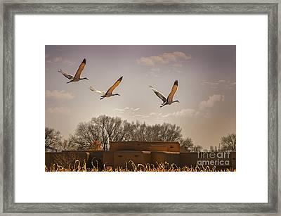 Flight Of The Cranes Framed Print