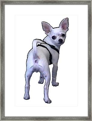 New York City Doggie 2002 What Are You Looking At 1a Jgibney Art 2009 Transp Framed Print