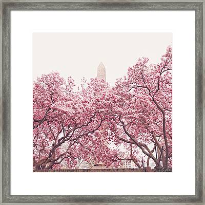 New York City - Springtime Cherry Blossoms Central Park Framed Print by Vivienne Gucwa