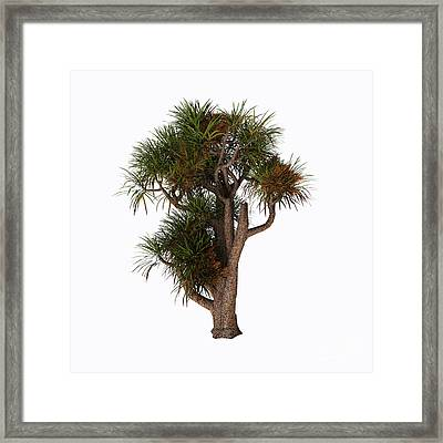 New Zealand Cabbage Tree Framed Print by Corey Ford