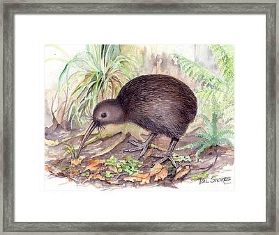 New Zealand Kiwi Framed Print by Val Stokes