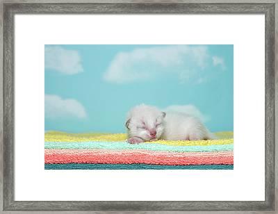 Newborn Siamese Kitten Sleeping Framed Print