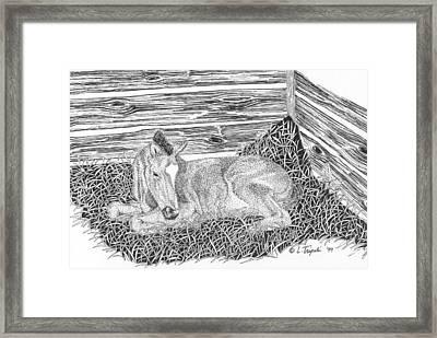 Newborn Framed Print by Lawrence Tripoli