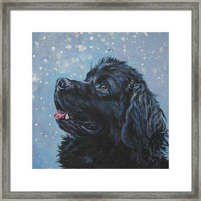 Newfoundland In Snow Framed Print by Lee Ann Shepard