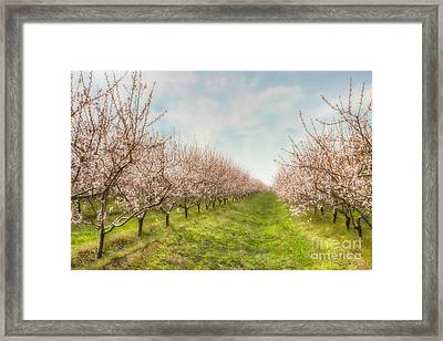Niagara's Spring Framed Print by Marilyn Cornwell