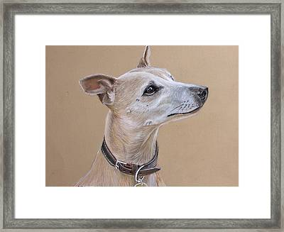 Niamh The Whippet Framed Print by Mary Mayes