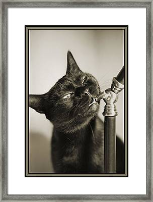 Nibbles Framed Print by Crystal Rolfe