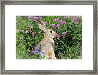 Nibbling On Chives Framed Print by Donna Kennedy