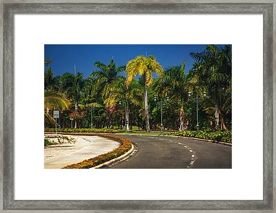 Nice Asfalt Road With Palm Trees Against The Blue Sky Framed Print