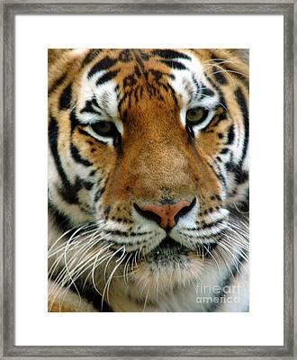 Nice Cat Framed Print