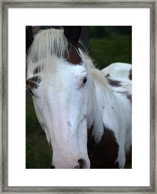 Nice To Meet You Framed Print by Kim