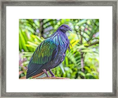 Nicobar Among Palms Framed Print