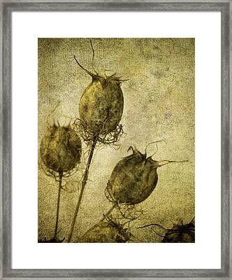 Framed Print featuring the digital art Nigella Pods by Margaret Hormann Bfa
