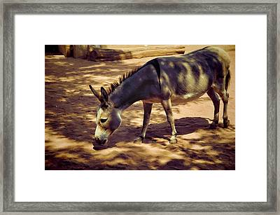 Nigerian Donkey Framed Print by Jan Amiss Photography