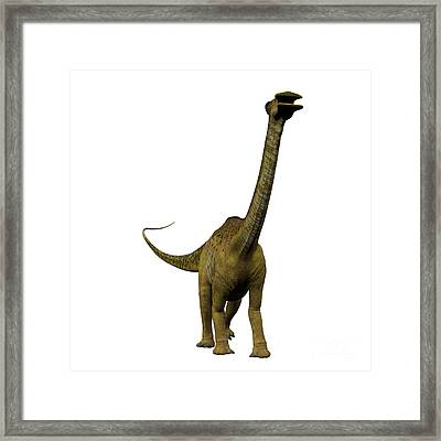 Nigersaurus On White Framed Print by Corey Ford