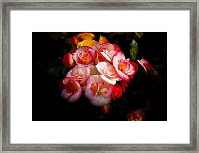 Night Begonias Three Framed Print by John Ater