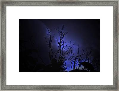 Night Bird Framed Print by Damijana Cermelj