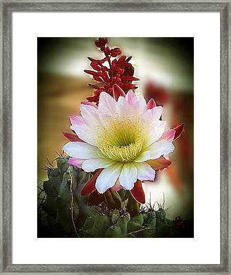 Framed Print featuring the photograph Night-blooming Cereus 2 by Marilyn Smith