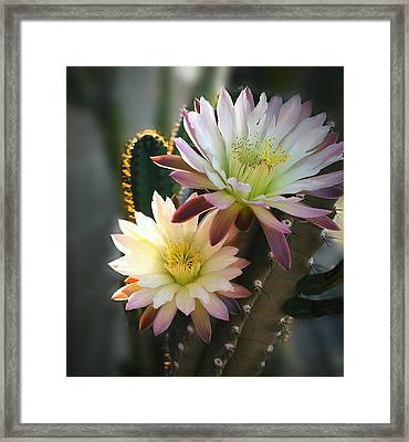 Framed Print featuring the photograph Night-blooming Cereus 3 by Marilyn Smith