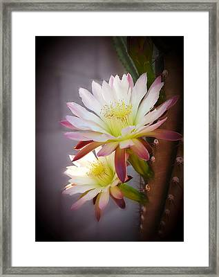 Framed Print featuring the photograph Night Blooming Cereus by Marilyn Smith