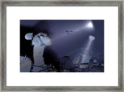 Night Dive Framed Print by Mushtaq Bhat